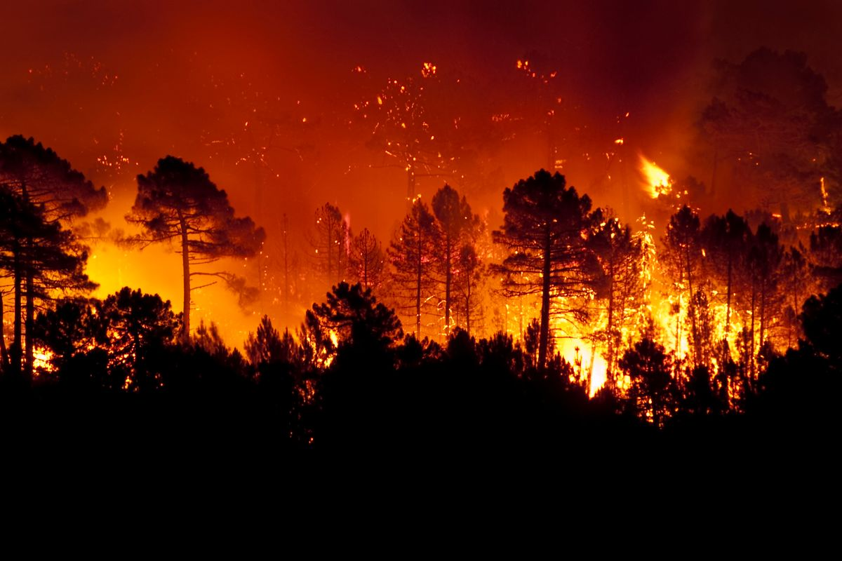 Fire Watch Guards Help Prevent Forest Fires